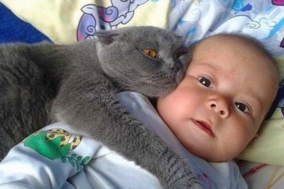 MOST Crazy Cats Annoying Babies