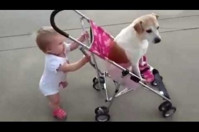 Babies And Dogs Take Each Other To Walk