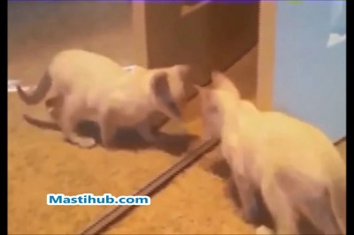 Inncoent cats funny video.