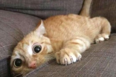 Best funny Moments of cats