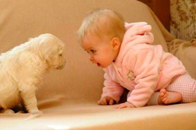 When Dogs and Babies Collide